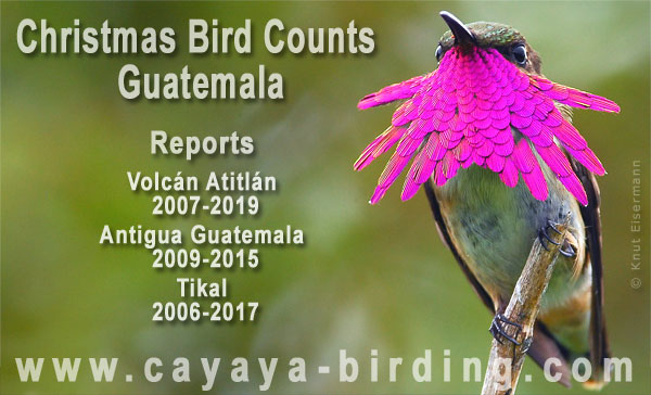 Christmas Bird Counts in Guatemala