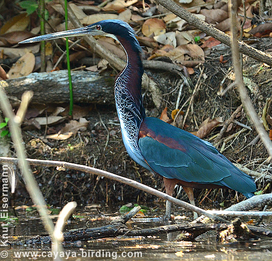 der bewaldeten Flüsse im Nationalpark Laguna del Tigre National Park